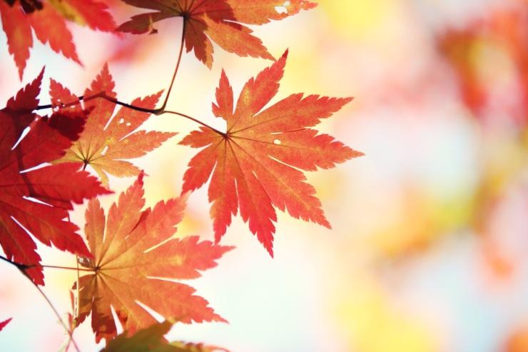 November-leaves